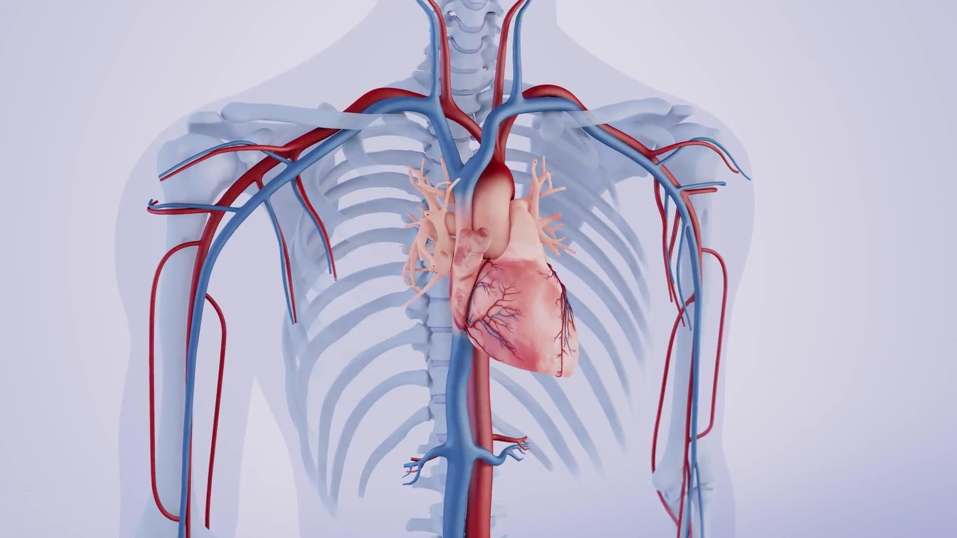 Seite montholsplemmoz: brust rechte stechen Stechen Unterhalb